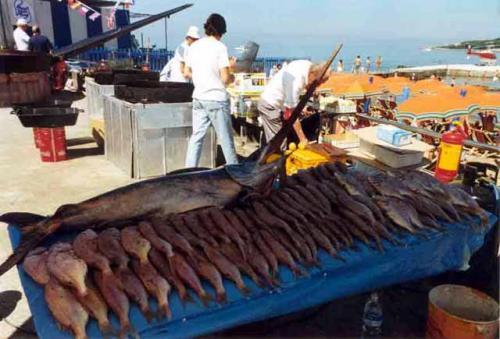 festa del pesce castiglioncello